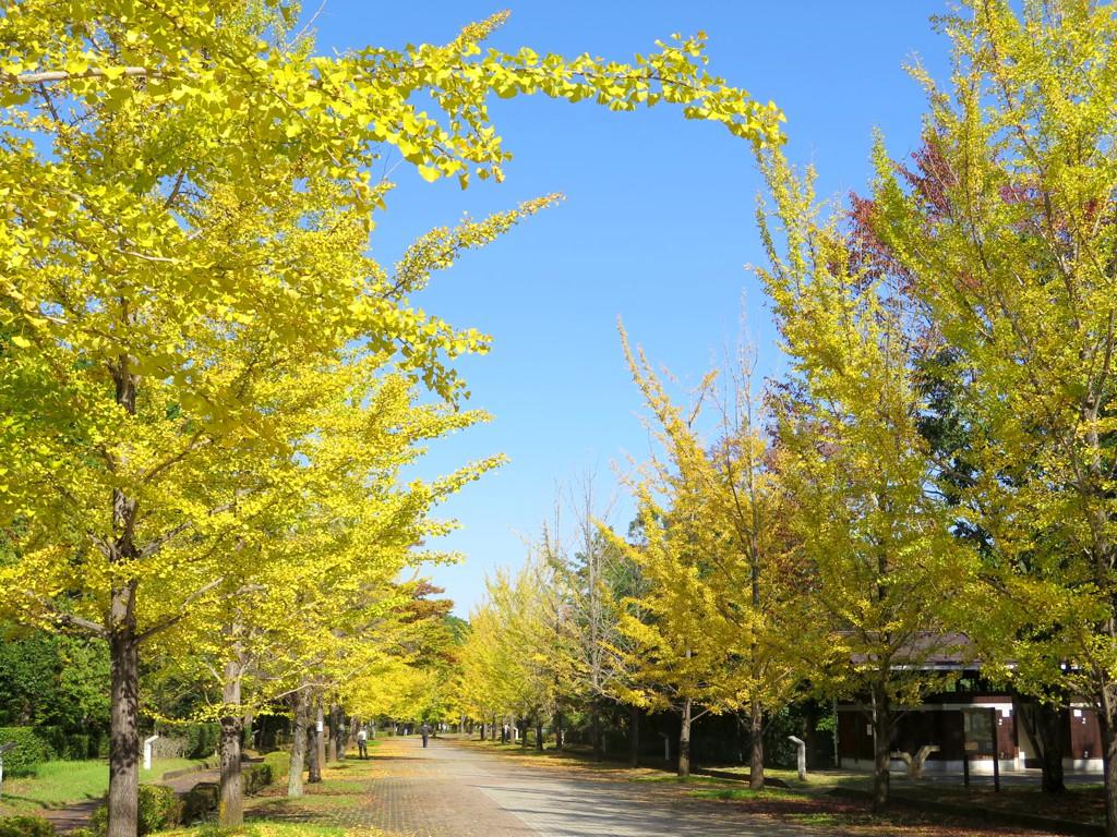 埼玉県の紅葉