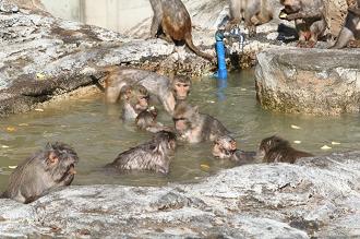 東武動物公園のカピバラ・サル山露天風呂&冬至イベント