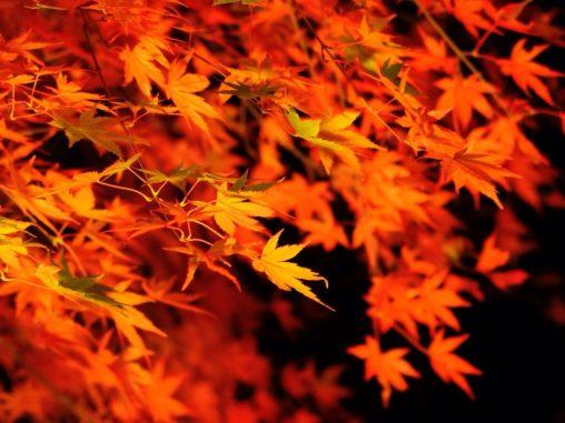 埼玉県営和光樹林公園の紅葉