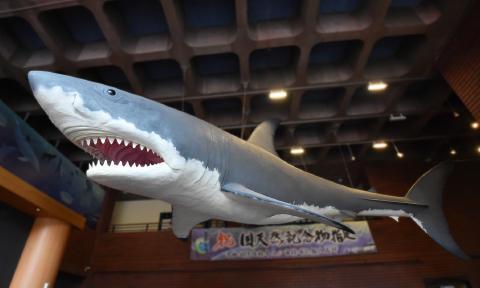 巨大ザメ カルカロドン メガロドン