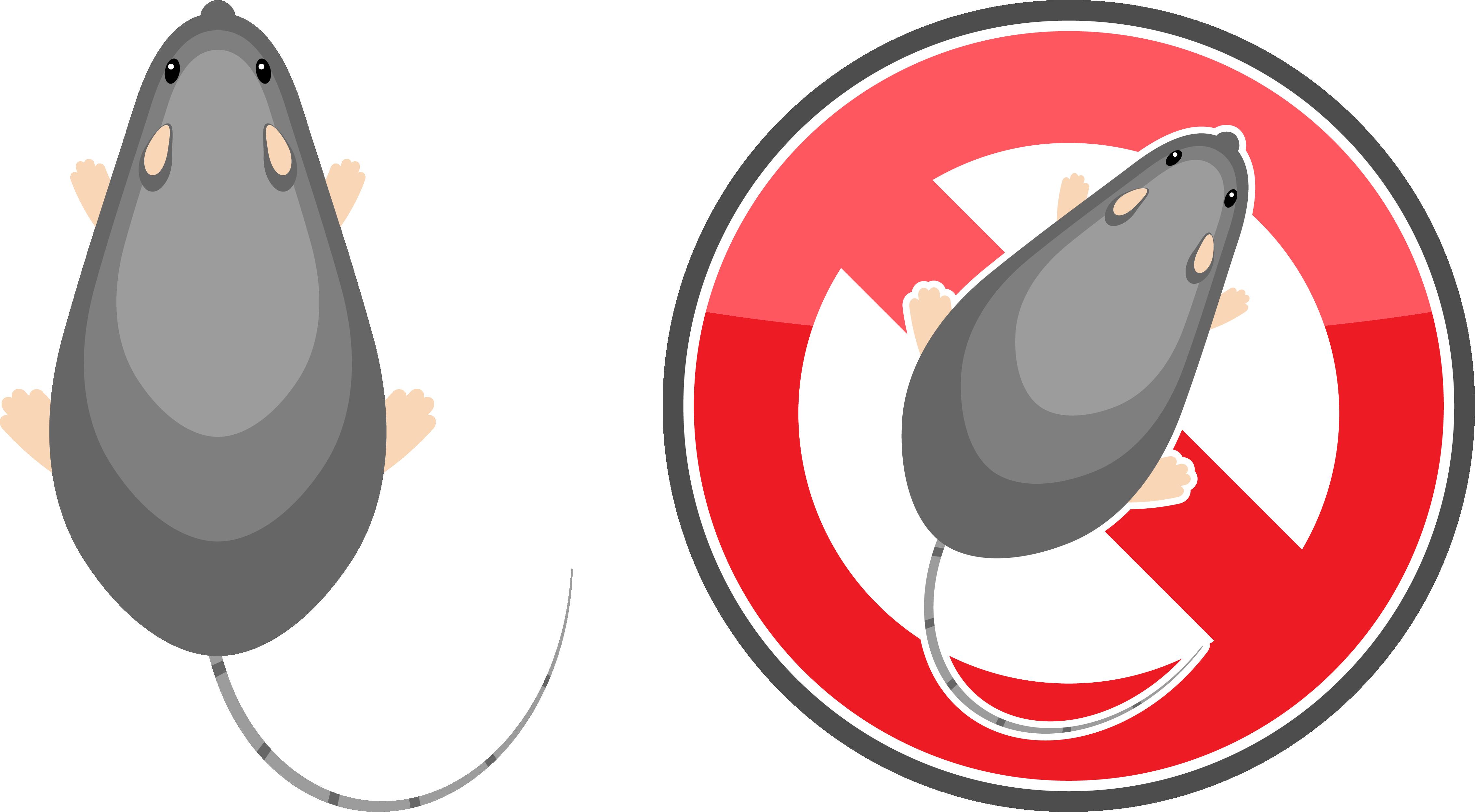 埼玉のネズミ駆除:ネズミ駆除のポイント