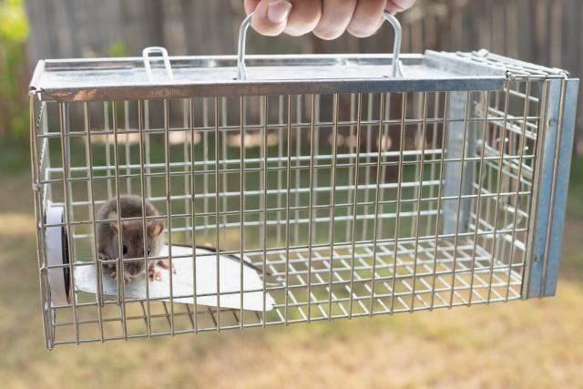 ネズミを捕獲する(物理的駆除)
